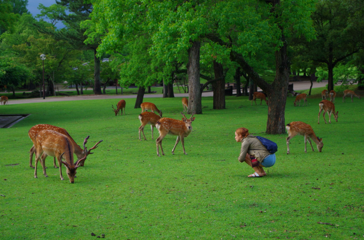 beautiful-deers